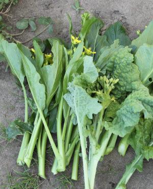 菜の花、アスパラ菜