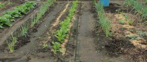 菜園の状況2