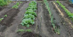 菜園の状況3