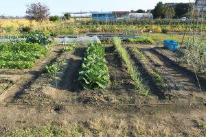 家庭菜園の状況