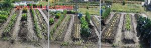 菜園の状況