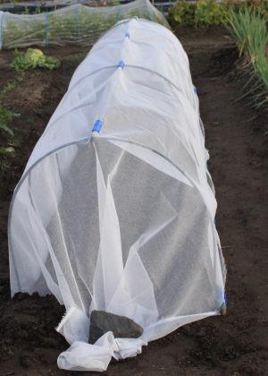 寒冷紗のなかに時なし大根の種まきをしました。寒冷紗は防寒/防風のためです。